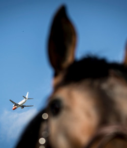 Equine Law: Jet-Setters of the Equine World