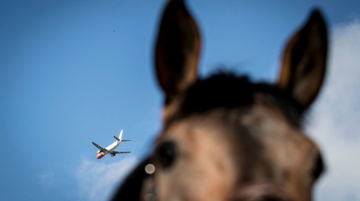 Pegasus for a Day: How the Olympic Horses and All Their Gear Get to Rio
