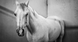 Kentucky Performance Products: Equine Depression