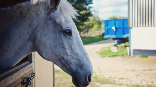 Equine Law: Agricultural or Stablemen's Liens, or 'My Barn Owner Can't Sell My Horse … Right?'