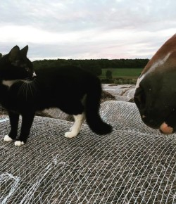 #TBT: The 10 Commandments of Being a Barn Cat