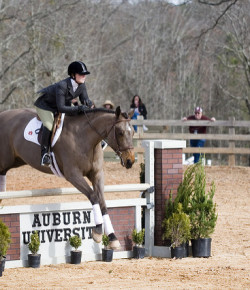 Equine Law: Donating Your Horse To a College Program
