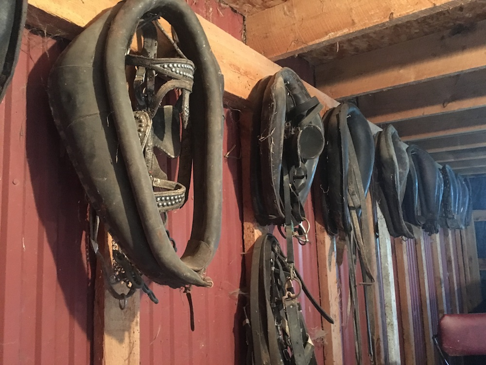 Old collars and bridles still hang in the barn. Photo by Kristen Kovatch.