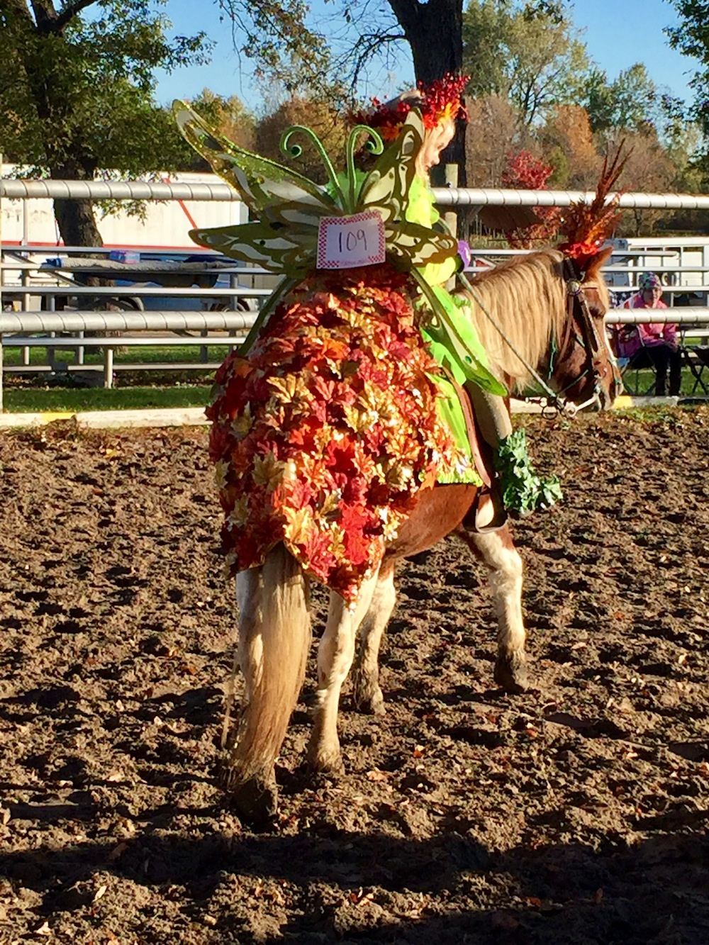 6 fantasy costume ideas for your horse plus our contest pres by