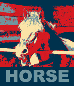 10 Reasons Having Horses Is Like An Election Year (But Better)