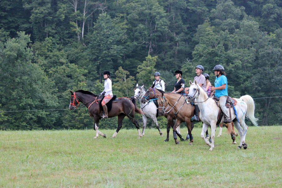This motley crew definitely shows the wide variety of horse breeds and sizes! Photo by Dom's Mike, via Facebook.