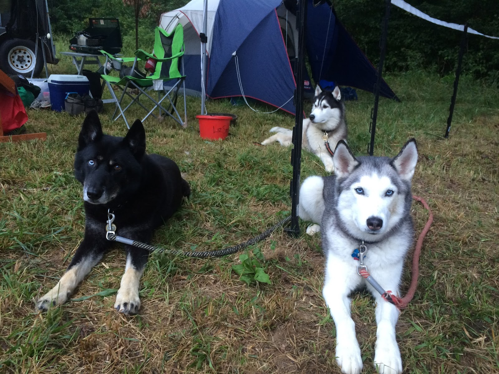 Sonka, Kenai, and Lyra. We had a very recognizable camp of pointy-eared howling things. Photo by Austen Gage.