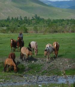 The Muck Bucket List: Mongolia