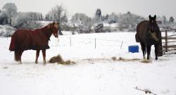 HN Carols: 'O Come All Ye Horse-Poor'