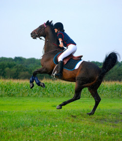 10 Signs Your Horse Might Not Like You Very Much