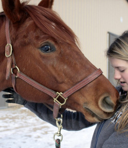 10 Horse Life Truths That You Should Know Before Diving In