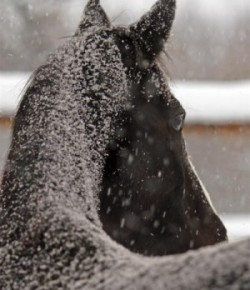 Kentucky Performance Products: The Horse's Winter Coat