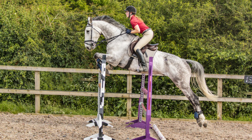 Age Isn't Just a Number: Considerations When Purchasing a Horse