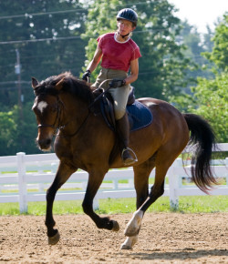 Equine Law: Protection When You're Out of Town