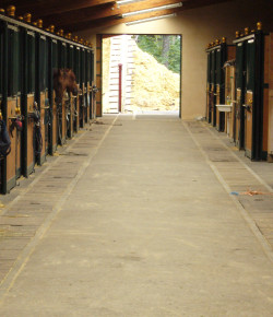 Equine Law: Keeping Your Barn 'Stable' With Rules
