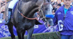 Arrogate Slated to Retire After Breeders' Cup