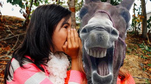Drama Llamas: A Horse Writer's Observation
