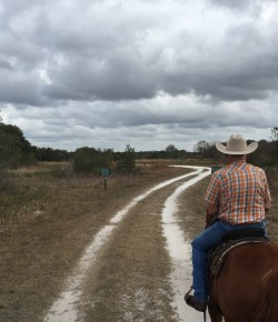 The Academic Equestrian: A Florida Winter