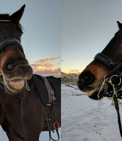 Product Review: The Tota Comfort Bridle
