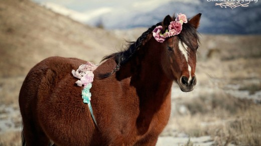 Equine Photographer Strikes Gold With Pony's Maternity Photoshoot