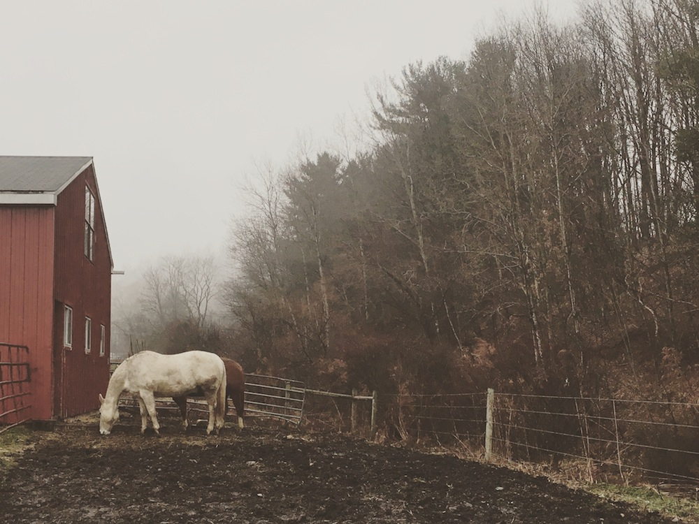 Mud, mud everywhere...and some very winter-fat horses who are begging for riding. Photo by Kristen Kovatch.