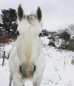 5 Ways To Enjoy Winter (That Your Horse Will Hate)