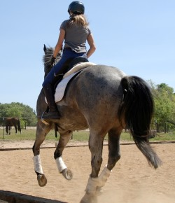 10 More Tips For Keeping a Horse Blog
