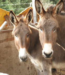 Donkeys Are Under Threat Worldwide