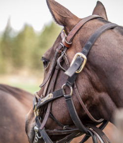 Equine Law: The Clone Wars