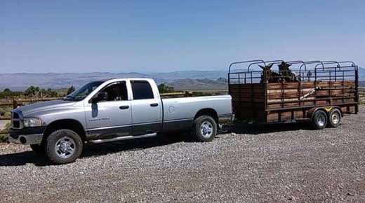10 Ways Your Truck Is Like Your Horse (& Vice-Versa)