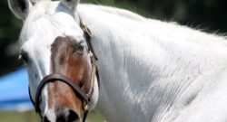 12 Horses That Look Like No Other