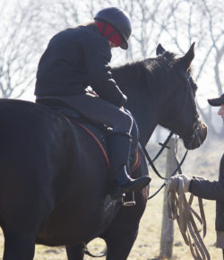 Equine Law: Pony Rides For All! (After You Sign A Release)