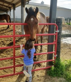 #TBT: Why Horses Are Better Than Boyfriends and/or Girlfriends