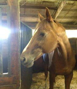 International Lesson Horse Day Essay Winner: Cinema