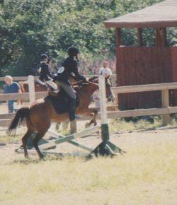 International Lesson Horse Day: HN Staff