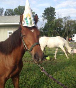 Photo Challenge: 16 Horse Birthday Celebrations