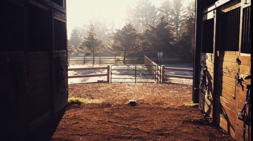 Photo Challenge: Views From the Barn Aisle