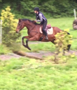 Retired Racehorse Project Showcase: Trainer Videos, Part I