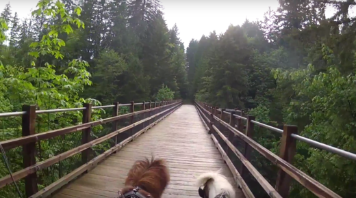 World Equestrian Brands Helmet Cam: Mini Driving on the Trans-Canada Trail