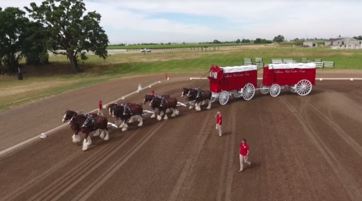 World Equestrian Brands Drone Cam: Cal Crush Clydesdales & Restored Mining Wagons