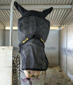 Product Review: Absorbine UltraShield Fly Mask