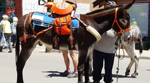 Your Turn: The Inaugural Creede Pack Burro Race