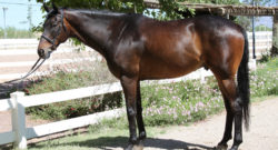 Best of JN: Looking for a Constellation in OTTBs