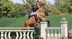 Best of JN: Lines in 5-7-5 If Your Horse Can't Even