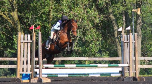 Retired Racehorse Project Showcase: Equipment Selections, Part 1