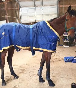 Product Review: Accuhorsemat