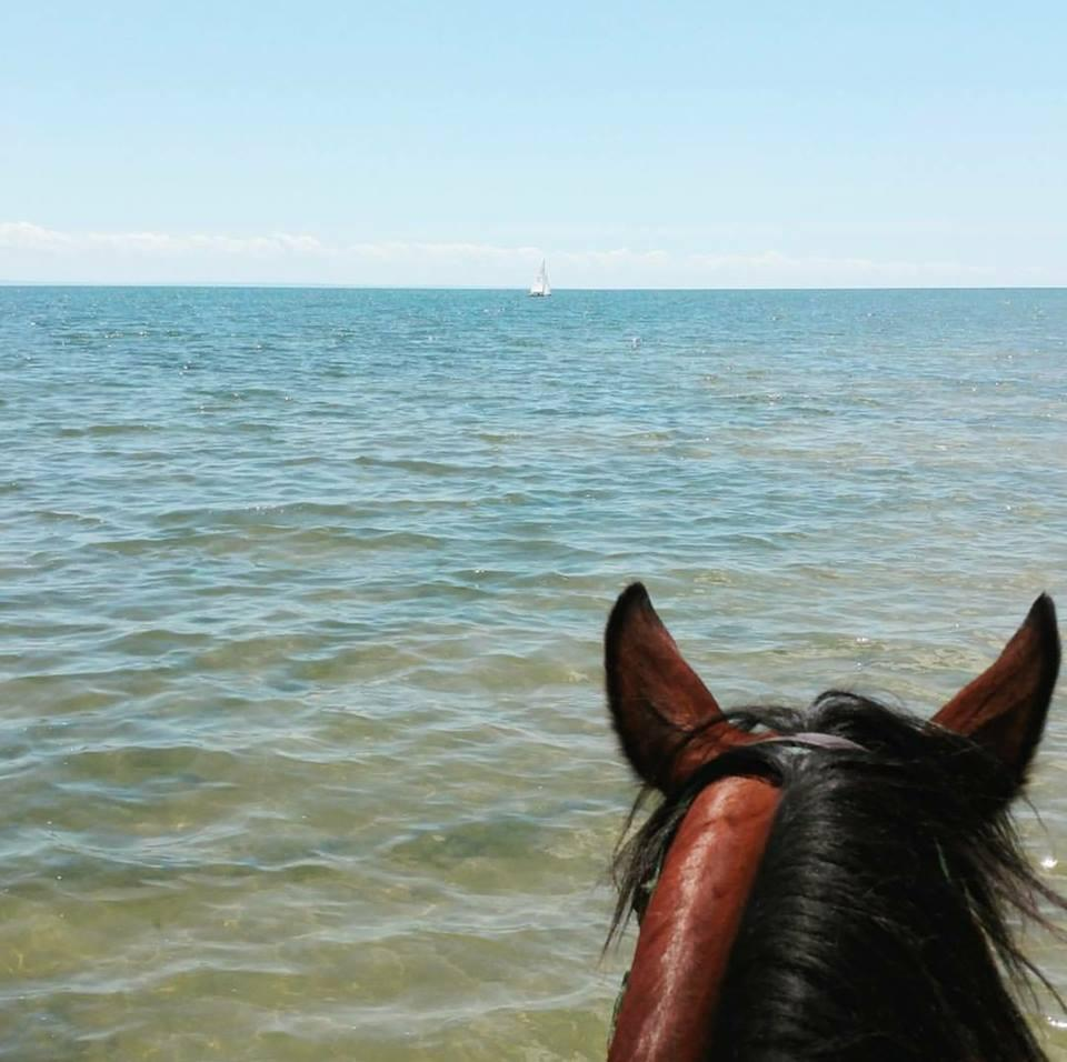 Photo challenge 10 readers and horses on the beach horse nation maria buttigiegs horse at lake erie photo by grace paura sciox Choice Image