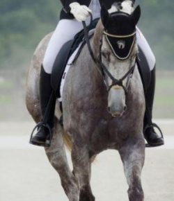 Retired Racehorse Project Showcase- Equipment Selections, Part 2