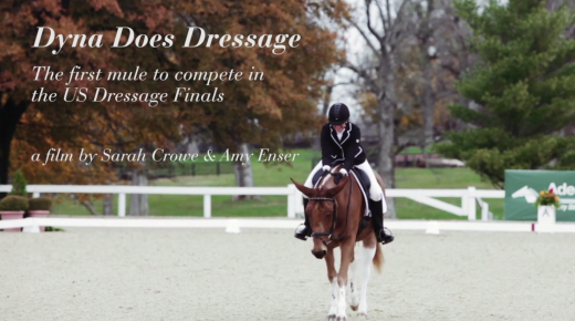 'Dyna Does Dressage' Doc Features First Mule to Compete in US Dressage Finals