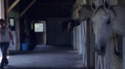 Standing Ovation by Ovation Riding: Akindale Thoroughbred Rescue